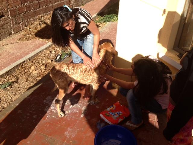 Hunde_waschen