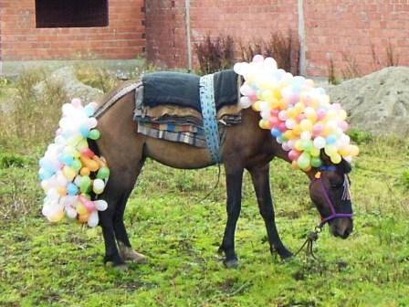 Pferd_Carnevalero