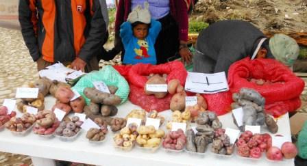 Kartoffelpräsentation